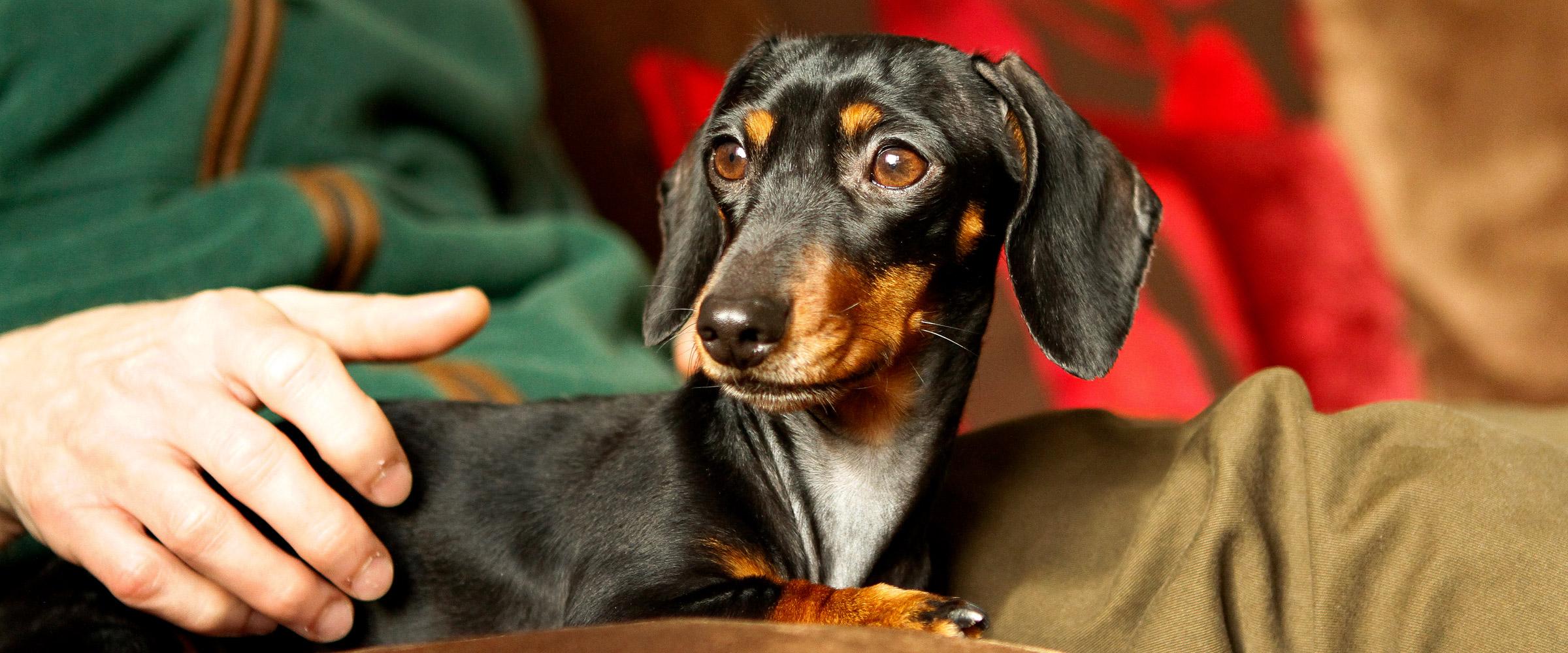 Dog-photography-banbury