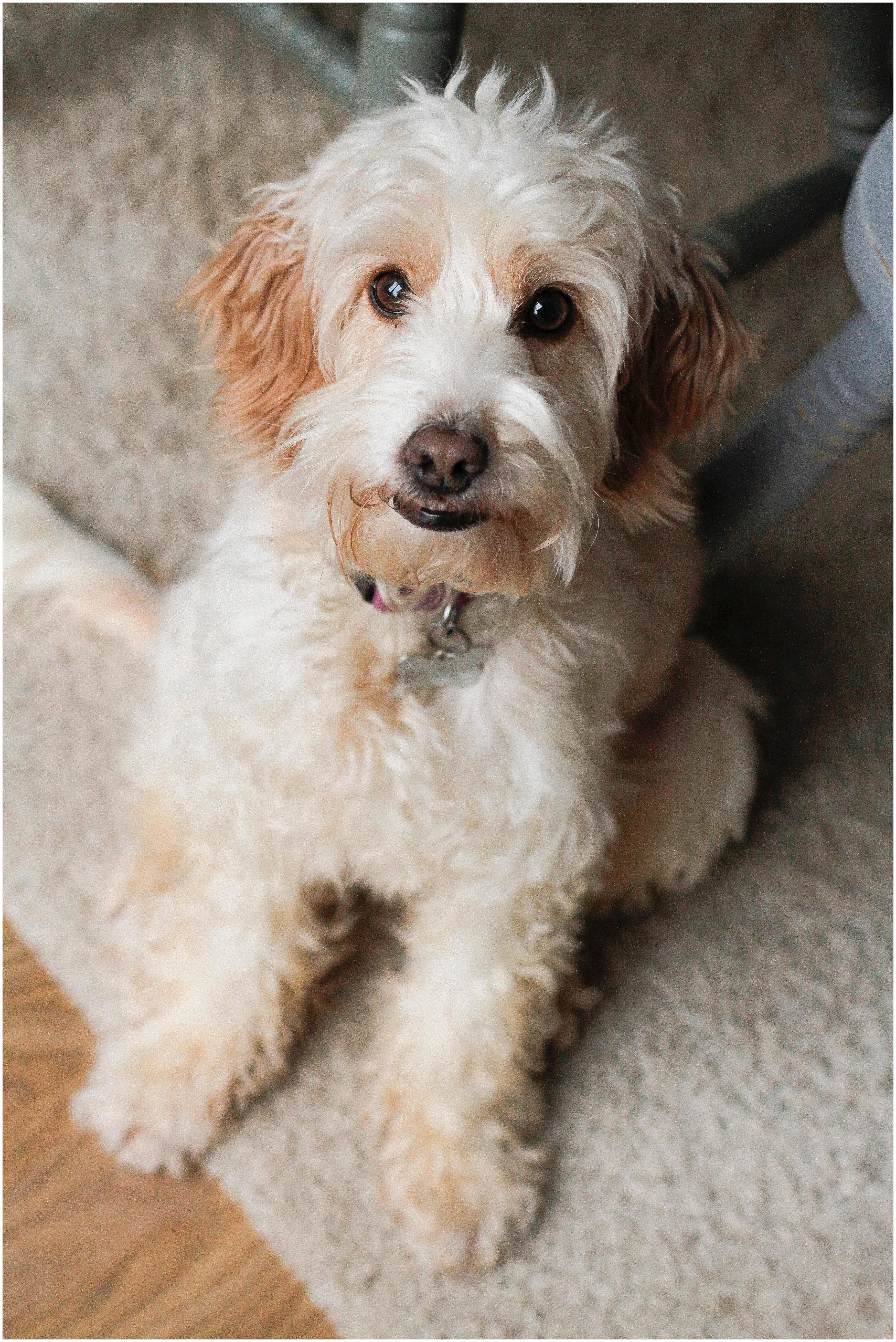 dog-photographer-banbury